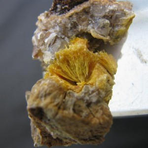 A splay of boltwoodite crystals